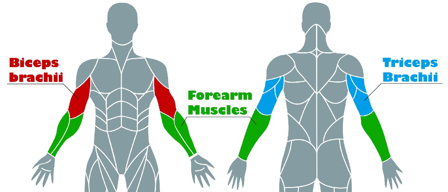 Arms Mucles Multi feature