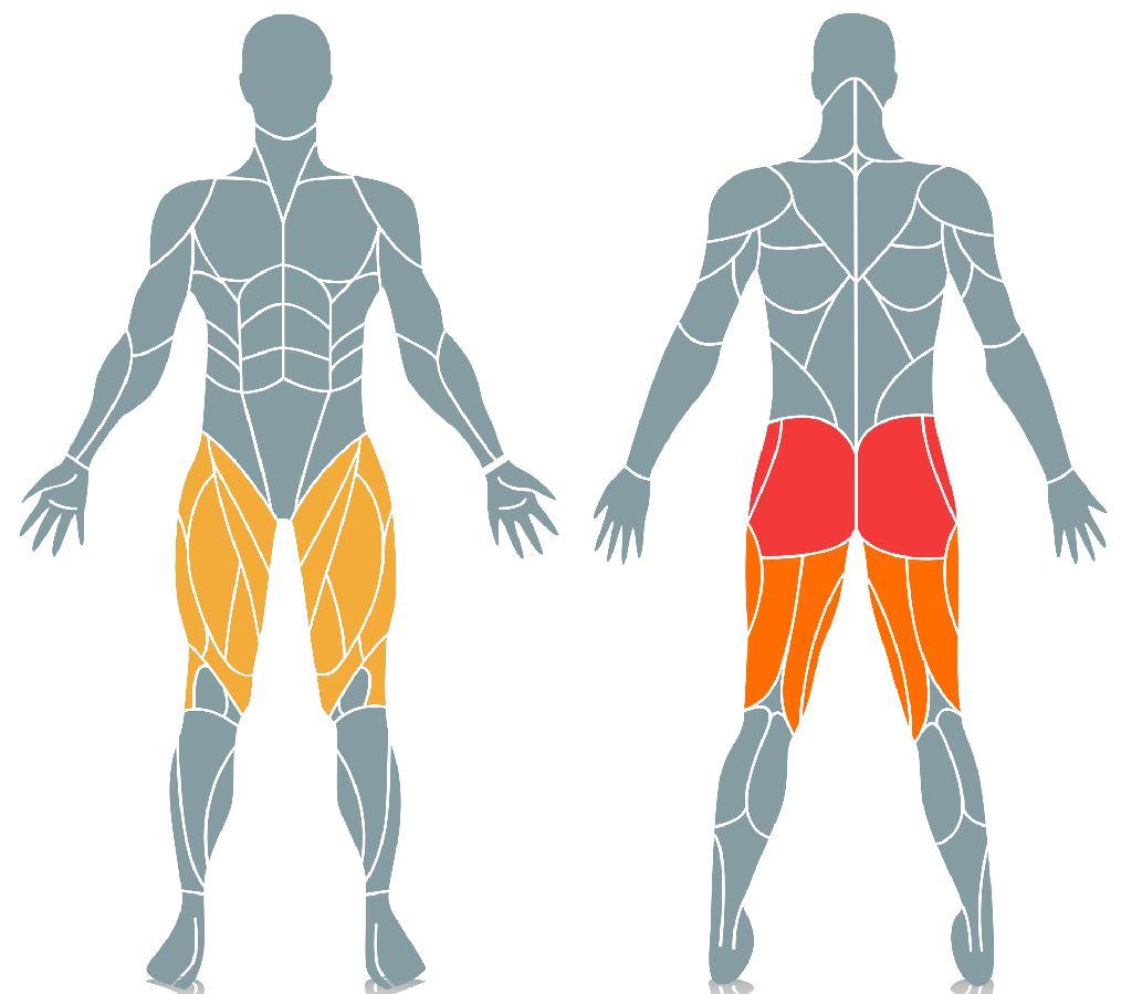 Lower Body muscles mini